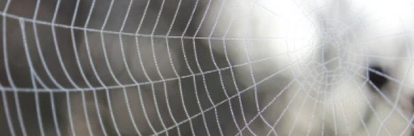 orumcekagi